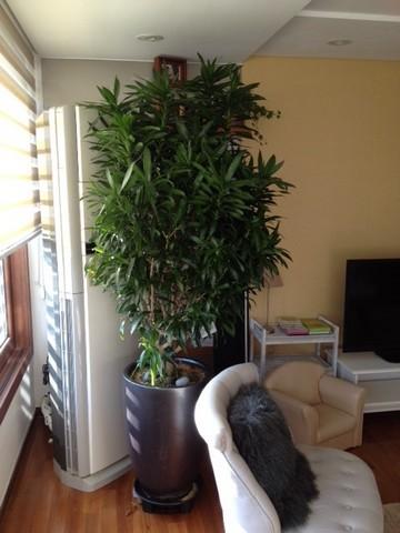 Quelle est cette plante? Plante10