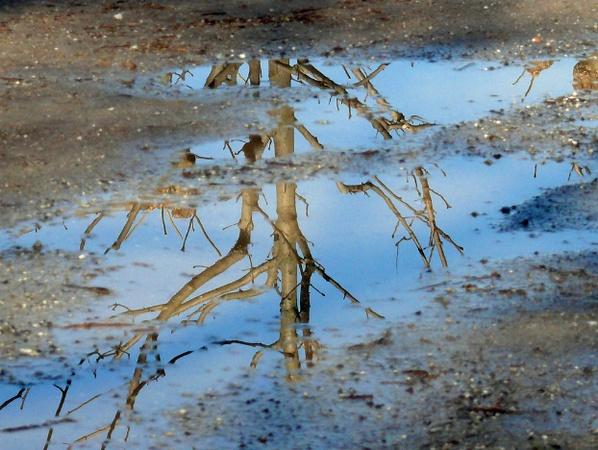 36 - Les reflets dans les flaques d'eau........ photos reçues !!! Sans_t25