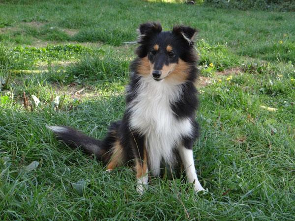 photos de chiens nés LOF et non confirmable Dsc05511