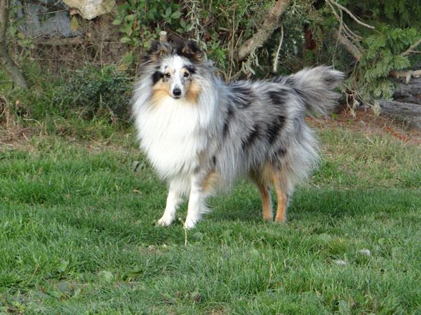 photos de chiens nés LOF et non confirmable Dsc05711