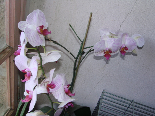 Photos de la nature, été 2008 - Page 4 Orchid11