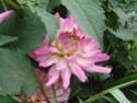 Photos de la nature, été 2008 - Page 4 2008_071