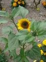 Photos de la nature, été 2008 - Page 4 2008_072