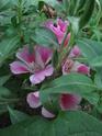 Photos de la nature, été 2008 - Page 4 2008_097