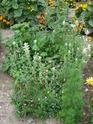 Photos de la nature, été 2008 - Page 4 2008_230