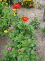Photos de la nature, été 2008 - Page 4 2008_232