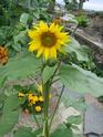 Photos de la nature, été 2008 - Page 4 2008_240
