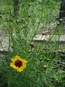 Photos de la nature, été 2008 - Page 4 2008_355
