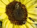 Photos de la nature, été 2008 - Page 4 2008_361