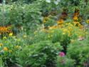 Photos de la nature, été 2008 - Page 4 Fleur10