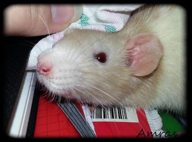 Les rats de récup', mes plus tout neufs - Page 2 Amjan110