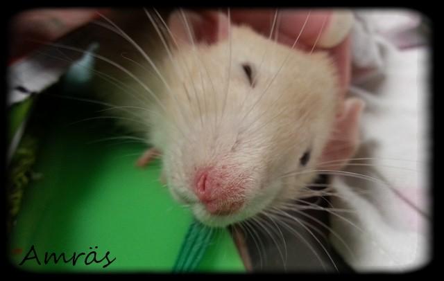 Les rats de récup', mes plus tout neufs - Page 2 Amjan111