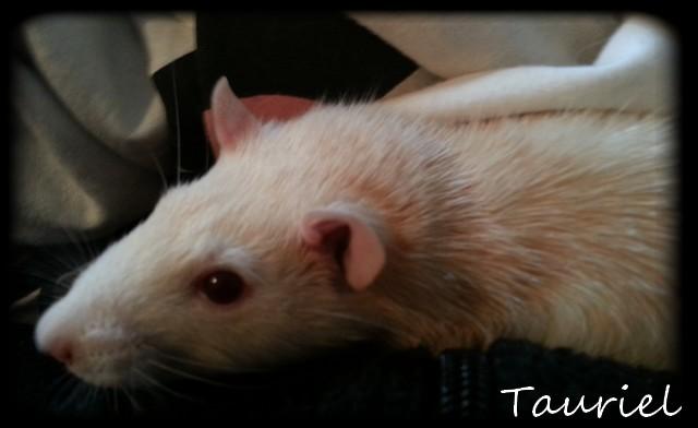 Les rats de récup', mes plus tout neufs - Page 2 Calinm10