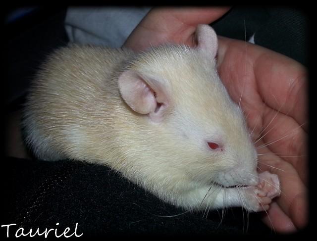 Les rats de récup', mes plus tout neufs - Page 2 Jan110