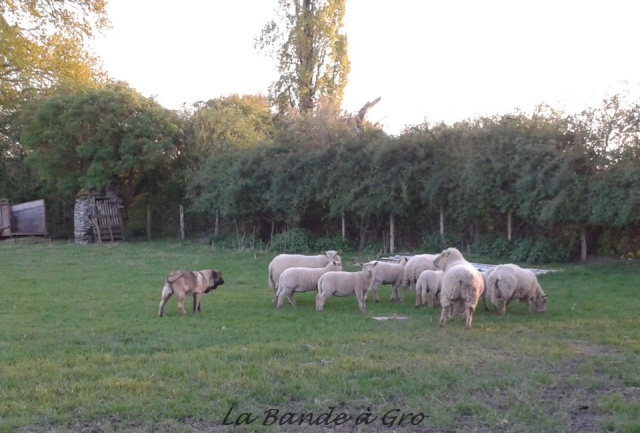 avril 2014 Chiens19