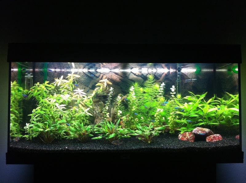 Mon 200 litres planté avec altispinosa et cardinalis Img_3310