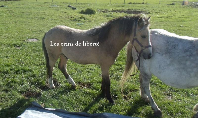 (Dpt 48) CARAMEL - ONC Poney - Sauvé par Hélèna !!!!!!!!!!!! (Janv 2014) - Page 5 Gedc0810