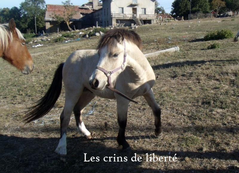 (Dpt 48) CARAMEL - ONC Poney - Sauvé par Hélèna !!!!!!!!!!!! (Janv 2014) - Page 6 Gedc0911