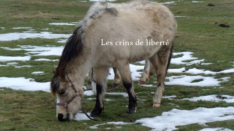 (Dpt 48) CARAMEL - ONC Poney - Sauvé par Hélèna !!!!!!!!!!!! (Janv 2014) - Page 5 Gedc1020