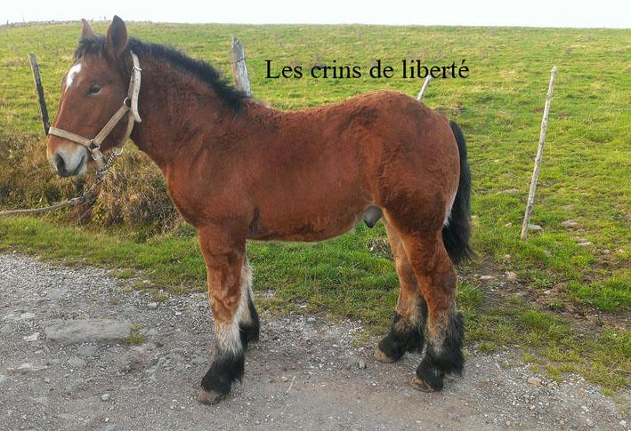 Dpt 15 - Didou de Menoire - Ardennais PP - Sauvé par Nininlapuce (Novembre 2013) - Page 2 Imag1311