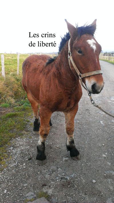 Dpt 15 - Didou de Menoire - Ardennais PP - Sauvé par Nininlapuce (Novembre 2013) - Page 2 Imag1312