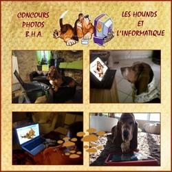 créer un forum : basset hound aventures - Portail Bhapor10