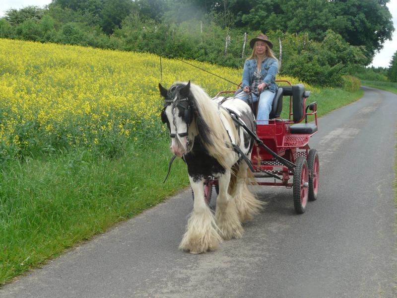 Mon cheval devant notre voiture ! Calach10