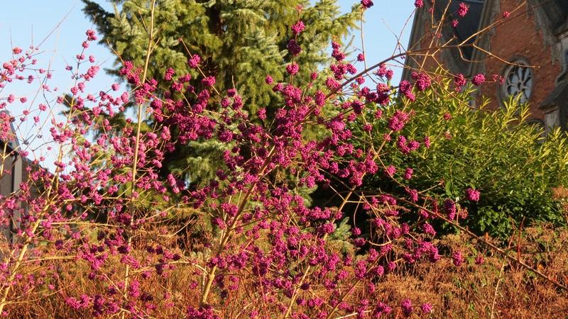 Un arbuste bien fourni Souche10