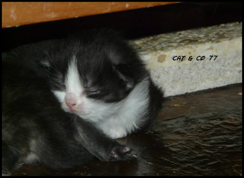 SOS pour l'association CAT & CO  98889410