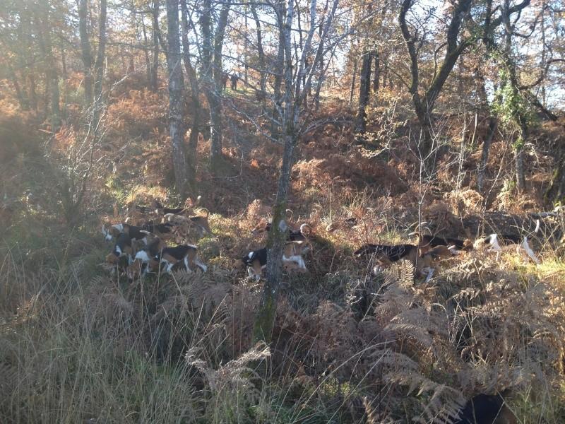 Compte rendu rallye du bois des chevreaux sainson 2013 2014 Chiens10