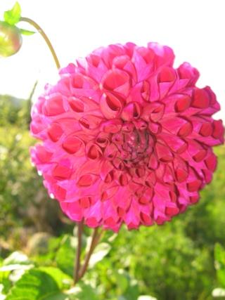 fleurs de marc et mario - Page 8 Img_0035