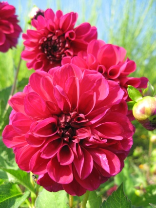 fleurs de marc et mario - Page 8 Img_0036