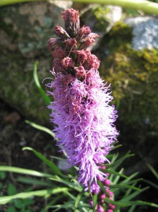 fleurs de marc et mario - Page 8 Img_0038