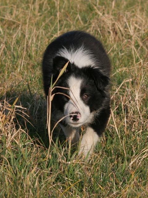 Vote final - photos de chiot 2009 Puppy10