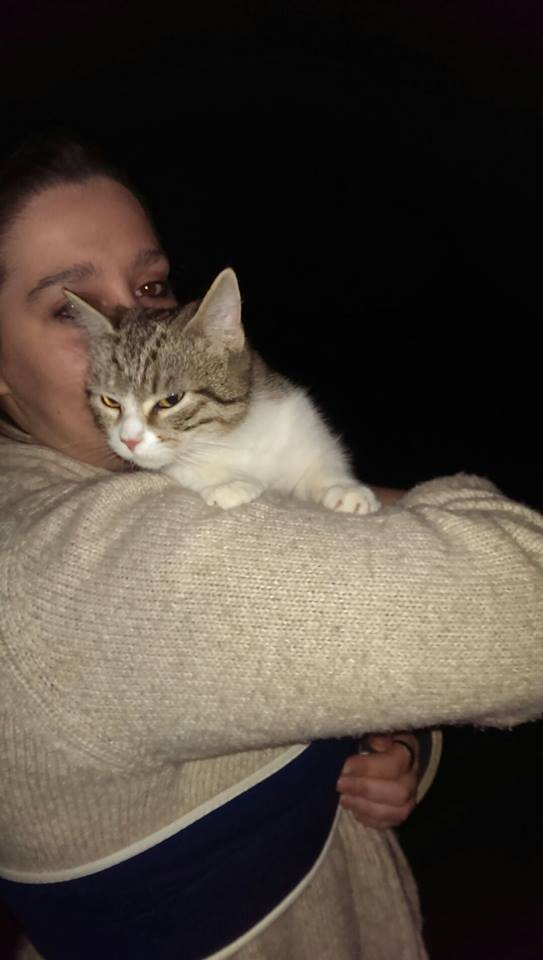 Jojoba 6/7 mois chaton mâle tigré blanc  113