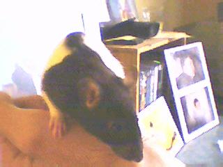 Séquence émotion: votre rencontre avec votre bébête - Page 2 Image_12