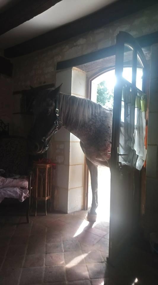 Dpt 77, 23 ans, Eros, hongre ONC, sauvé par Marie-Thérèse (mai 2018) - Page 2 40011411