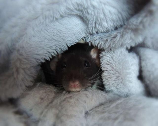 RAT'Z