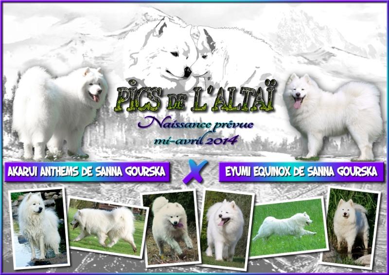 """Les premiers chiots """"Pics de l'Altaï"""" sont enfin là <3 Affich10"""