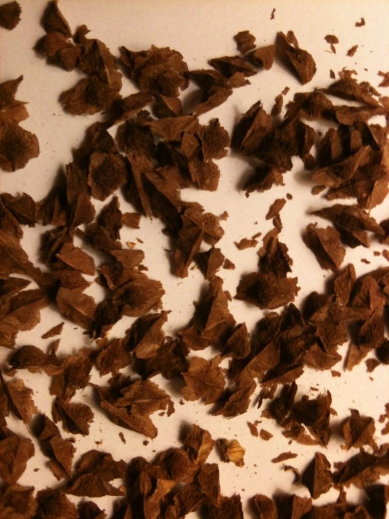 Boswellia sacra Boswel12