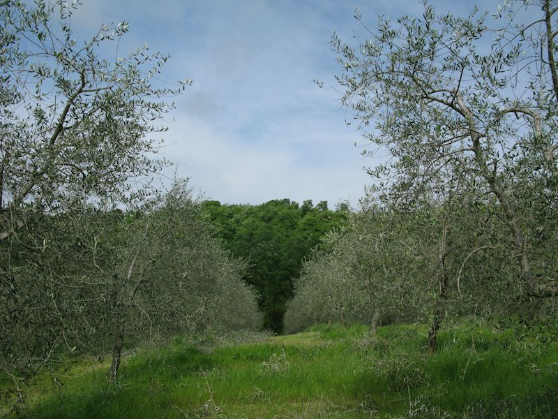Toscana en mai 2014 02_oli10