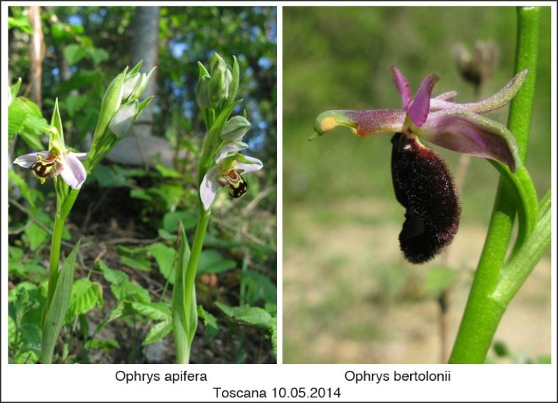 Toscana en mai 2014 03-api10