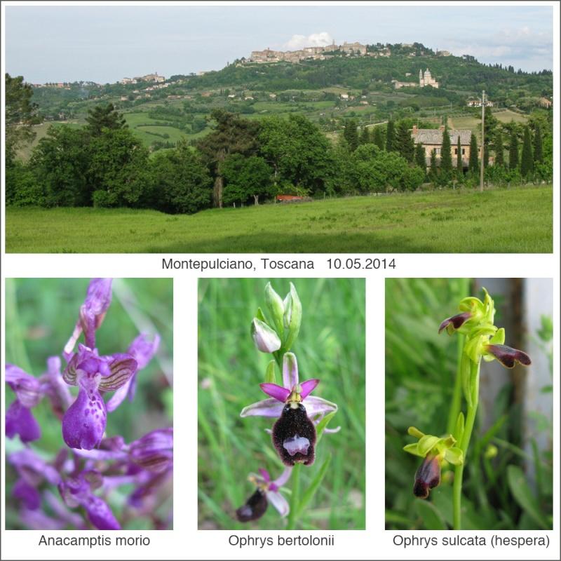 Toscana en mai 2014 07_au_10