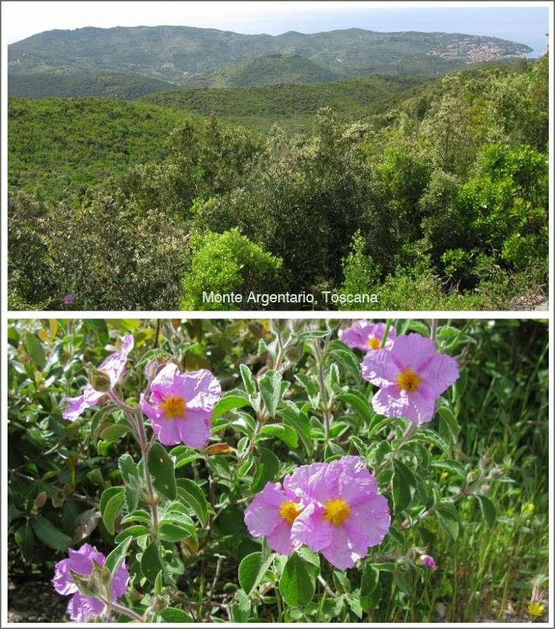 Toscana en mai 2014 10-mon10