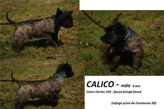 Calico,cairn lof de 6 ans 59974_10