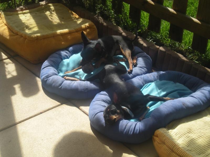 Marla et Junior, 2 adorables ratiers de Prague, adoptables ensemble Dscn9810