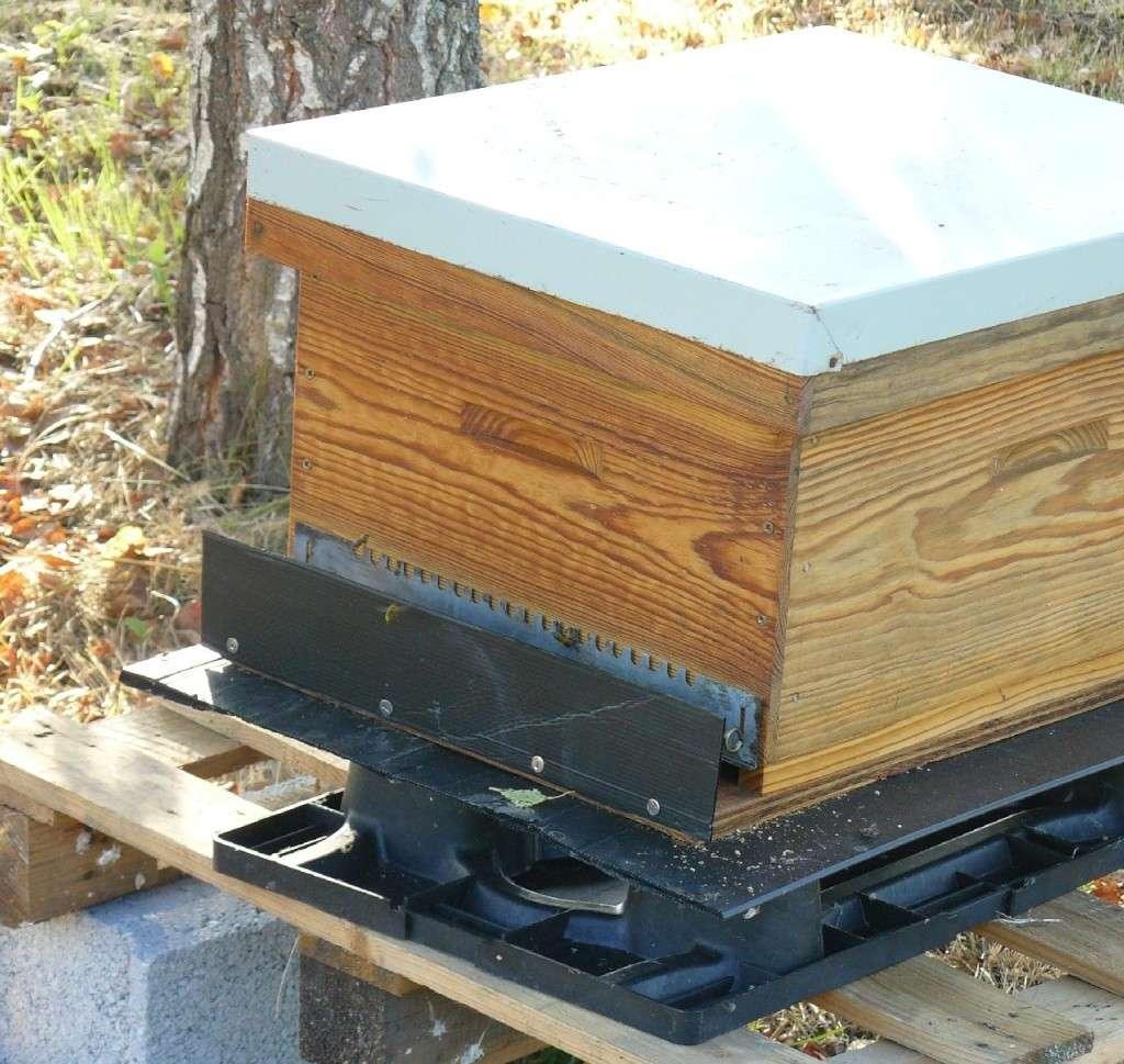 déplacement de trois ruches 2kms P1020010