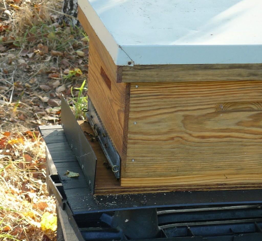 déplacement de trois ruches 2kms P1020011