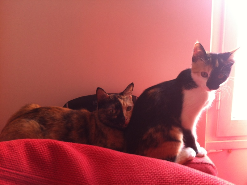 FICELLE et YUMI (Nosy Be) - Page 8 Img_1510