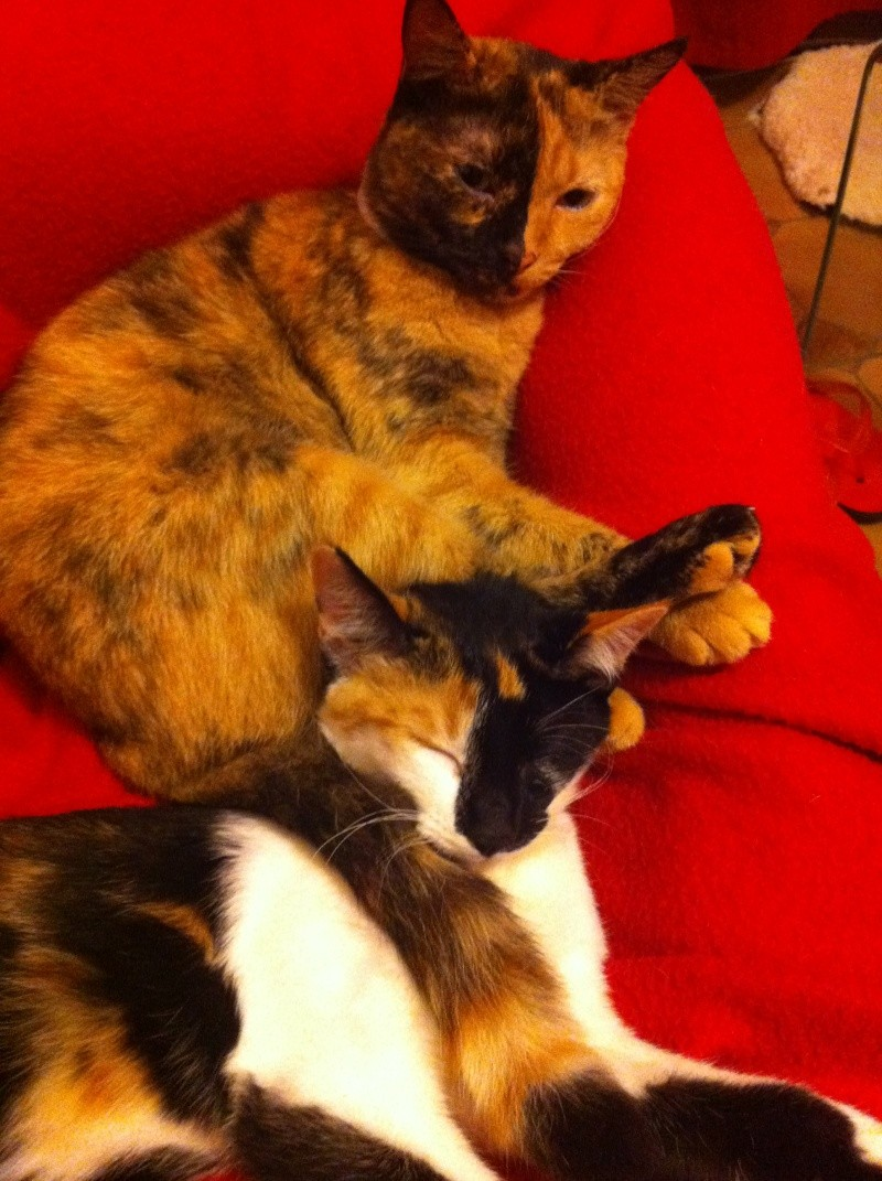 FICELLE et YUMI (Nosy Be) - Page 8 Img_1611